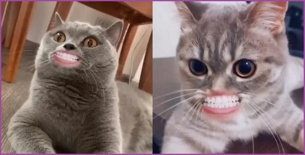 Маска рот кота из ТикТок